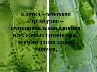 Клетка – основная структурно – функциональная единица всех живых организмов,