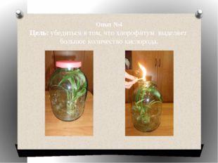 Опыт №4 Цель: убедиться в том, что хлорофитум выделяет большое количество кис