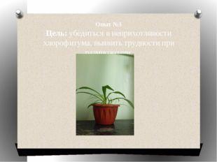 Опыт №3 Цель: убедиться в неприхотливости хлорофитума, выявить трудности при