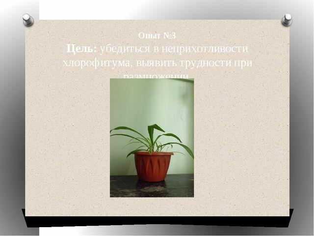 Опыт №3 Цель: убедиться в неприхотливости хлорофитума, выявить трудности при...