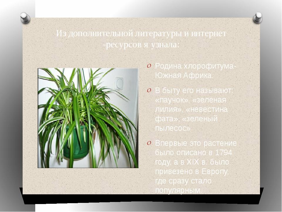 Из дополнительной литературы и интернет -ресурсов я узнала: Родина хлорофитум...