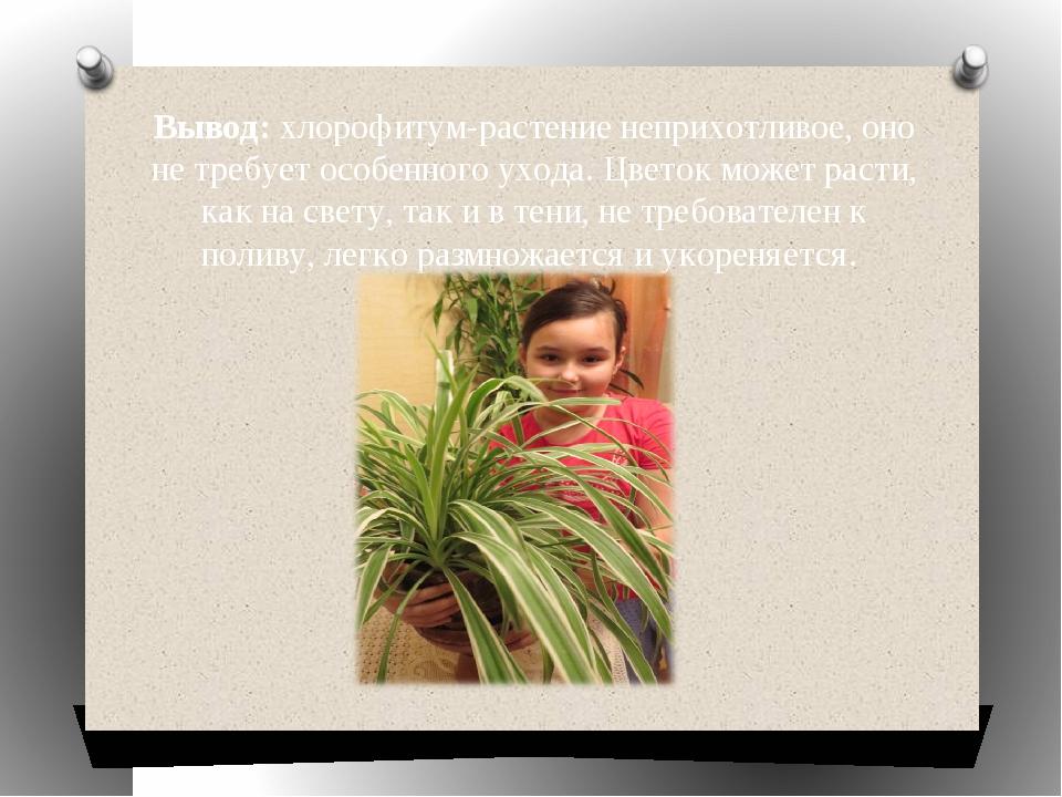 Вывод: хлорофитум-растение неприхотливое, оно не требует особенного ухода. Цв...