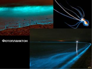 Фотопланктон