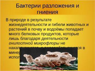 Бактерии разложения и гниения В природе в результате жизнедеятельности и гибе