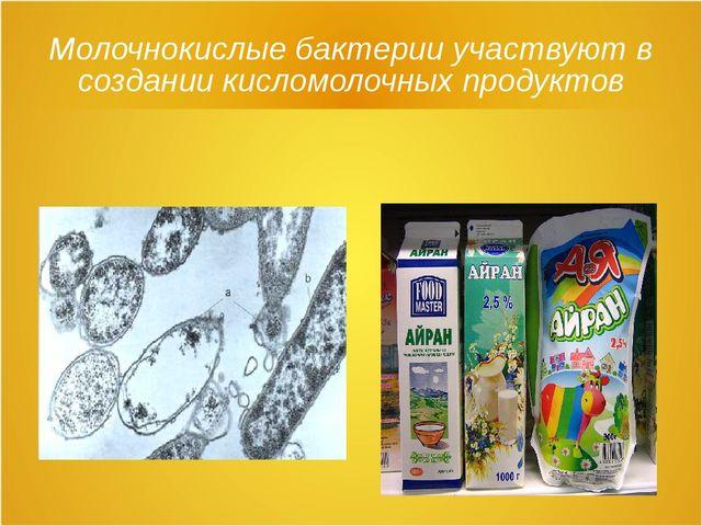 Молочнокислые бактерии участвуют в создании кисломолочных продуктов