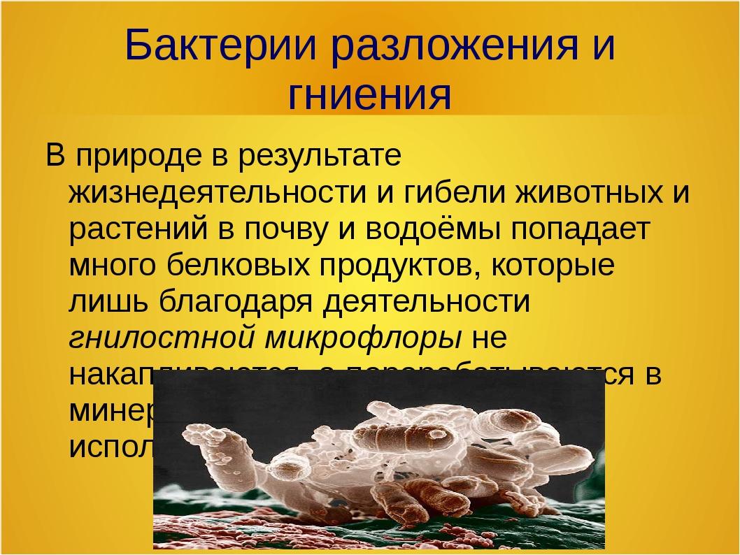 Бактерии разложения и гниения В природе в результате жизнедеятельности и гибе...
