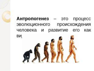 Антропогенез – это процесс эволюционного происхождения человека и развитие е