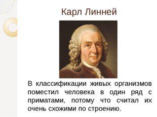 Карл Линней В классификации живых организмов поместил человека в один ряд с п