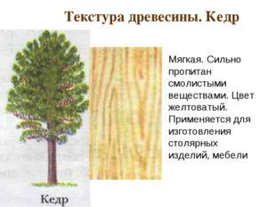 Текстура древесины. Кедр Мягкая. Сильно пропитан смолистыми веществами. Цвет