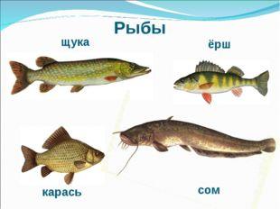 Рыбы карась щука ёрш сом