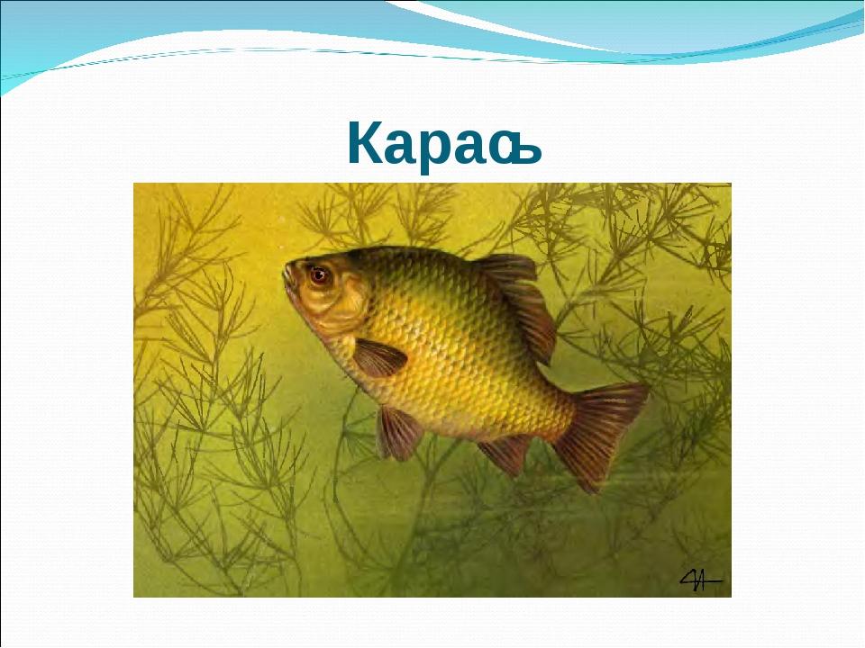 Карас ь