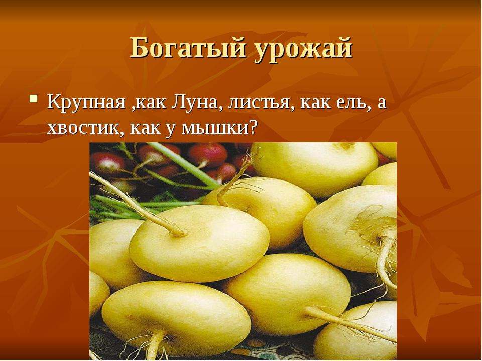 Богатый урожай Крупная ,как Луна, листья, как ель, а хвостик, как у мышки?