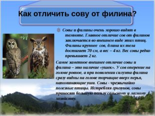 Как отличить сову от филина? Совы и филины очень хорошо видят в темноте. Глав