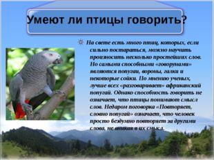 Умеют ли птицы говорить? На свете есть много птиц, которых, если сильно поста