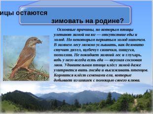 Какие птицы остаются зимовать на родине? Основные причины, по которым птицы у