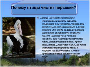 Почему птицы чистят перышки? Птице необходимо постоянно ухаживать за своими п