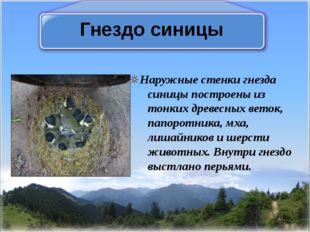 Гнездо синицы Наружные стенки гнезда синицы построены из тонких древесных вет