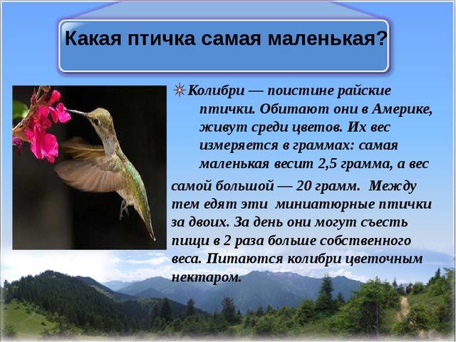 Какая птичка самая маленькая? Колибри— поистине райские птички. Обитают они...