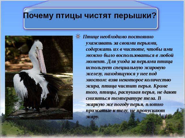 Почему птицы чистят перышки? Птице необходимо постоянно ухаживать за своими п...