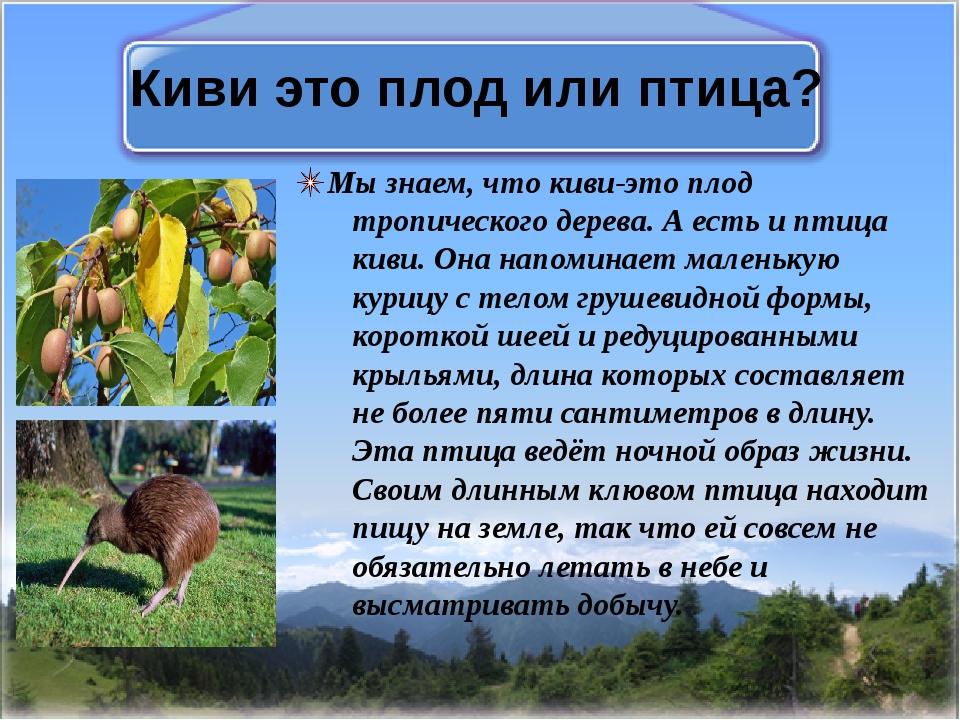Киви это плод или птица? Мы знаем, что киви-это плод тропического дерева. А е...