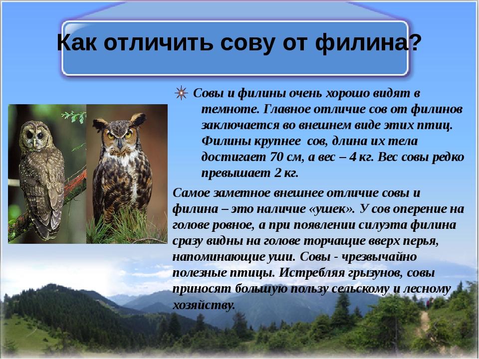 Как отличить сову от филина? Совы и филины очень хорошо видят в темноте. Глав...
