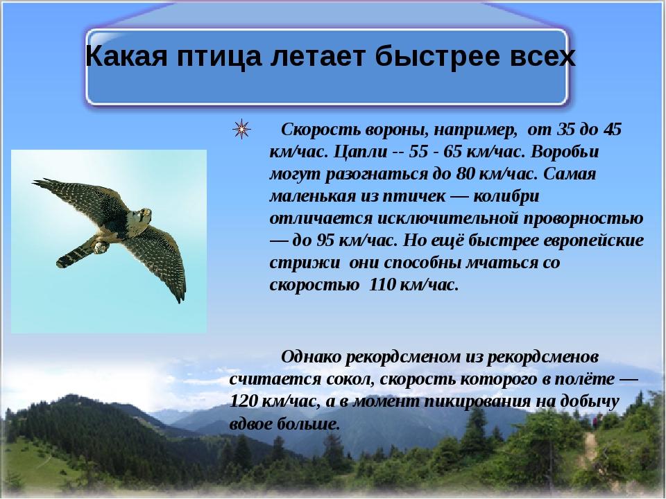 Какая птица летает быстрее всех Скорость вороны, например, от 35 до 45 км/час...