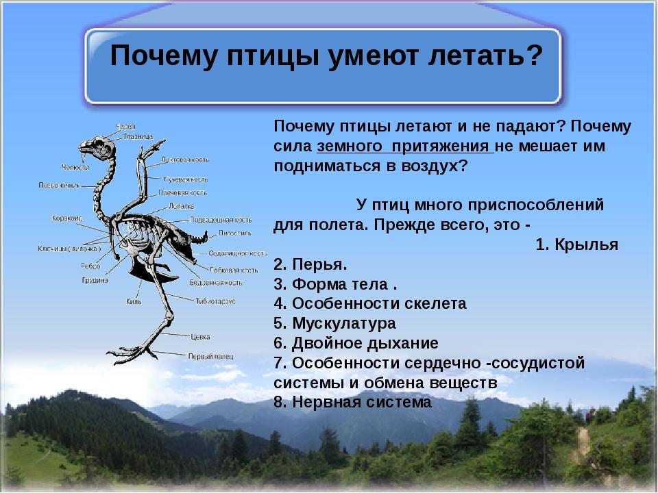 Почему птицы умеют летать? Почему птицы летают и не падают? Почему силаземно...