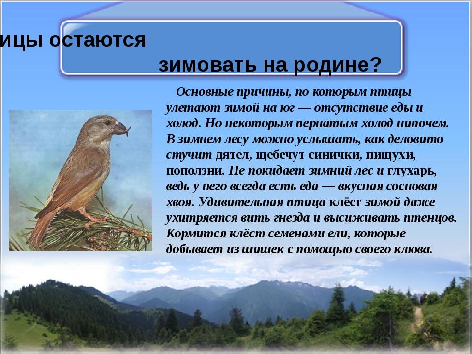Какие птицы остаются зимовать на родине? Основные причины, по которым птицы у...