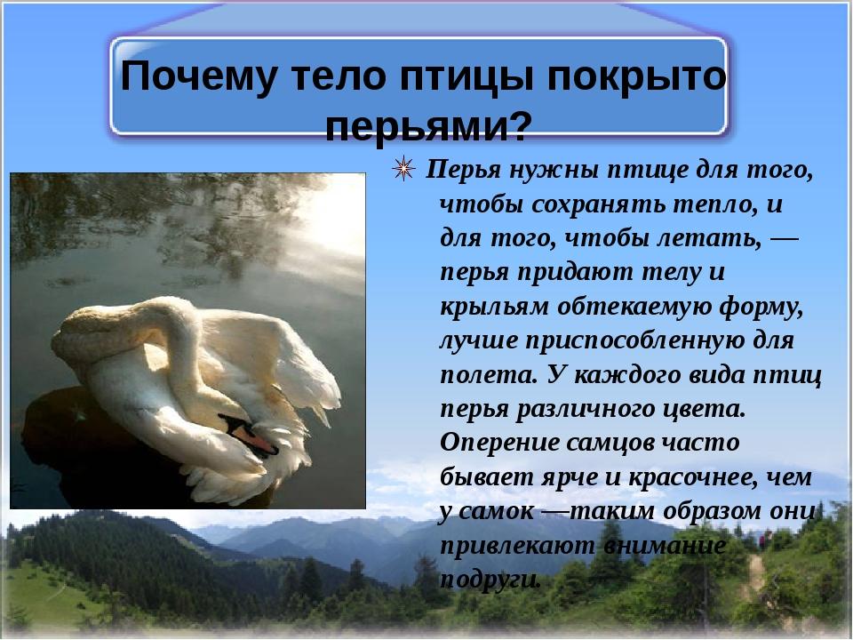 Почему тело птицы покрыто перьями? Перья нужны птице для того, чтобы сохранят...