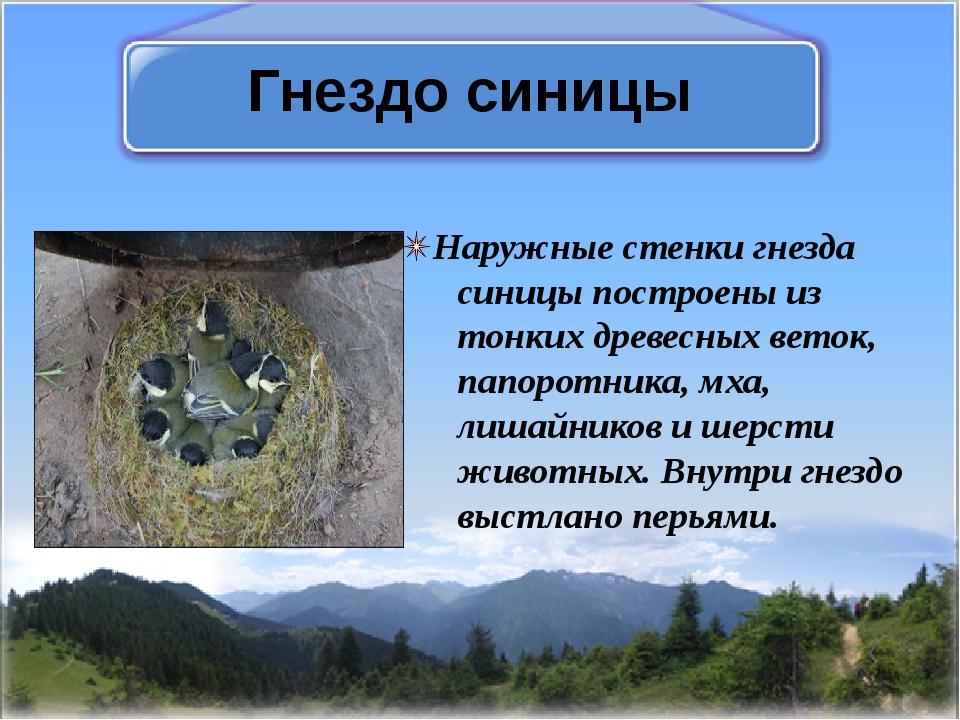 Гнездо синицы Наружные стенки гнезда синицы построены из тонких древесных вет...