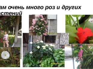 там очень много роз и других растений