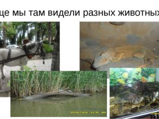 Еще мы там видели разных животных