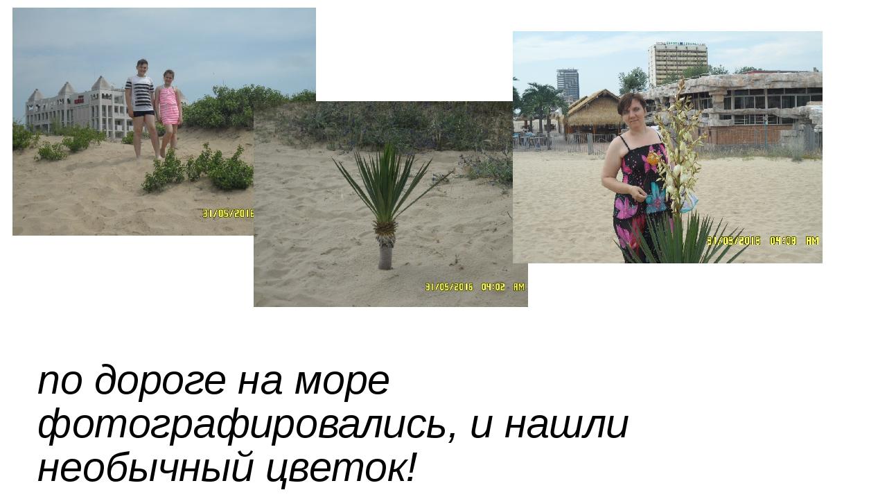 по дороге на море фотографировались, и нашли необычный цветок!