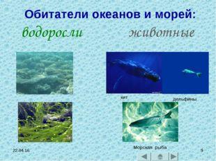 * * Обитатели океанов и морей: водоросли животные кит дельфины Морская рыба