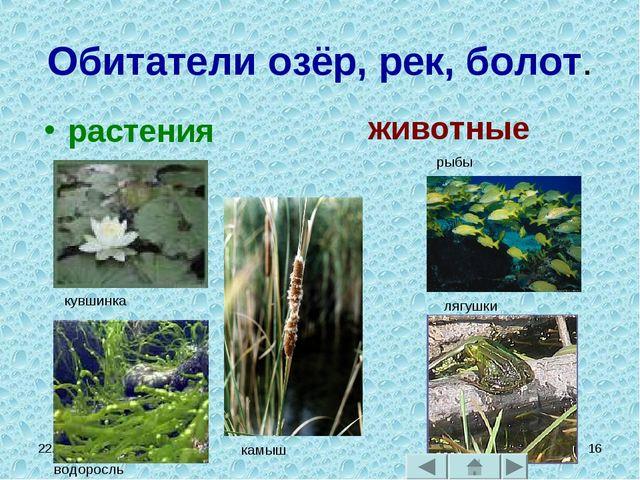* * Обитатели озёр, рек, болот. растения животные кувшинка водоросль камыш ры...