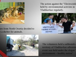 Volunteers from North Ossetia decided to organize a shelter for animals. The