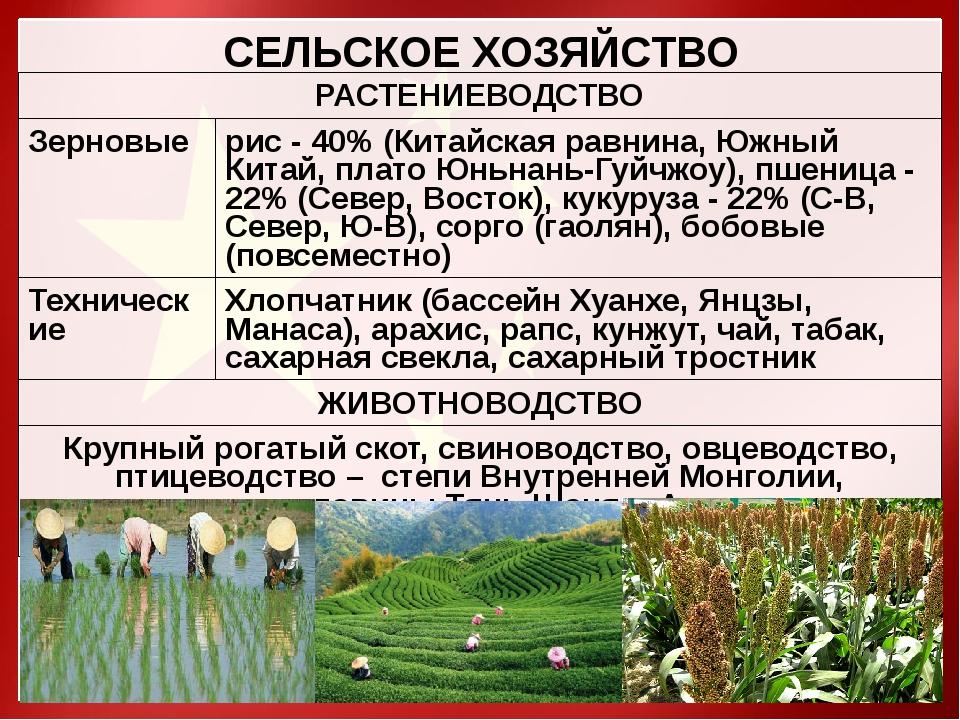 СЕЛЬСКОЕ ХОЗЯЙСТВО РАСТЕНИЕВОДСТВО Зерновые рис -40%(Китайская равнина, Южный...