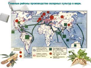 Главные районы производства сахарных культур в мире.