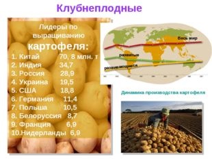 Лидеры по выращиванию картофеля: Китай 70, 8 млн. т Индия 34,7 Россия 28,9 Ук