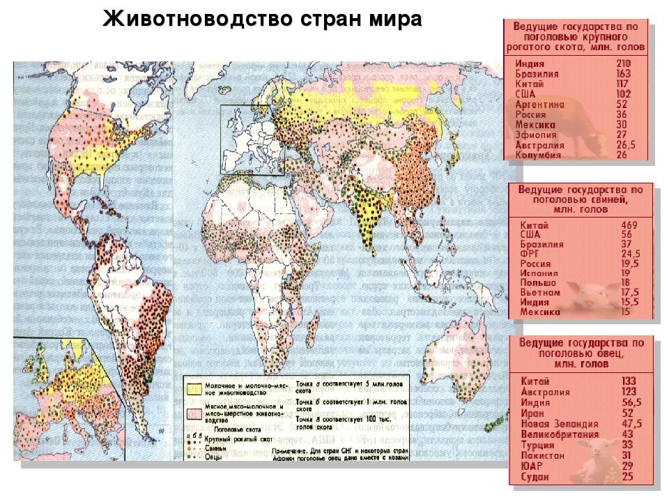 Животноводство стран мира