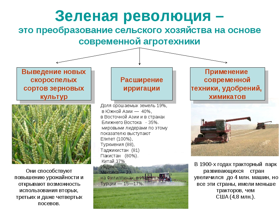 Зеленая революция – это преобразование сельского хозяйства на основе современ...