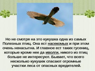 Но не смотря на этокукушкаодна из самых Полезных птиц. Она естнасекомыхи