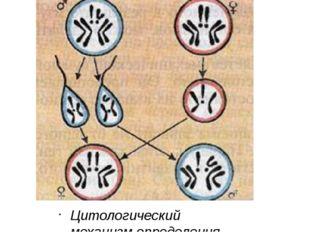 Цитологический механизм определения пола у дрозофилы.