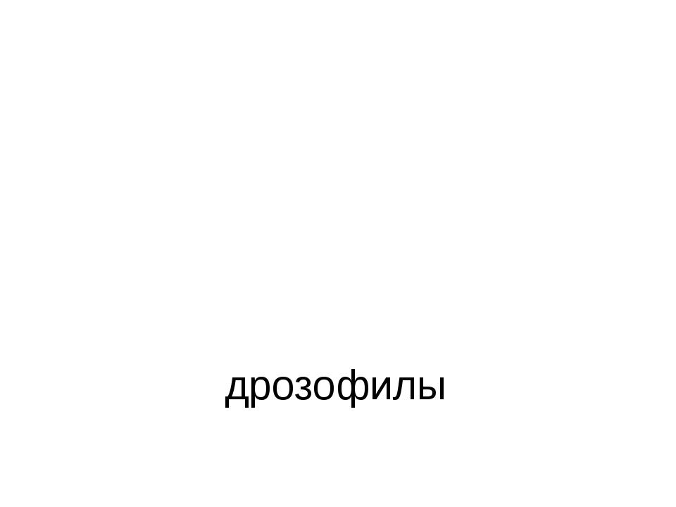 дрозофилы