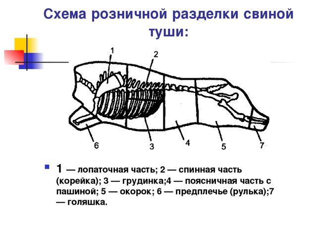 Схема розничной разделки свиной туши: 1 — лопаточная часть; 2 — спинная часть...
