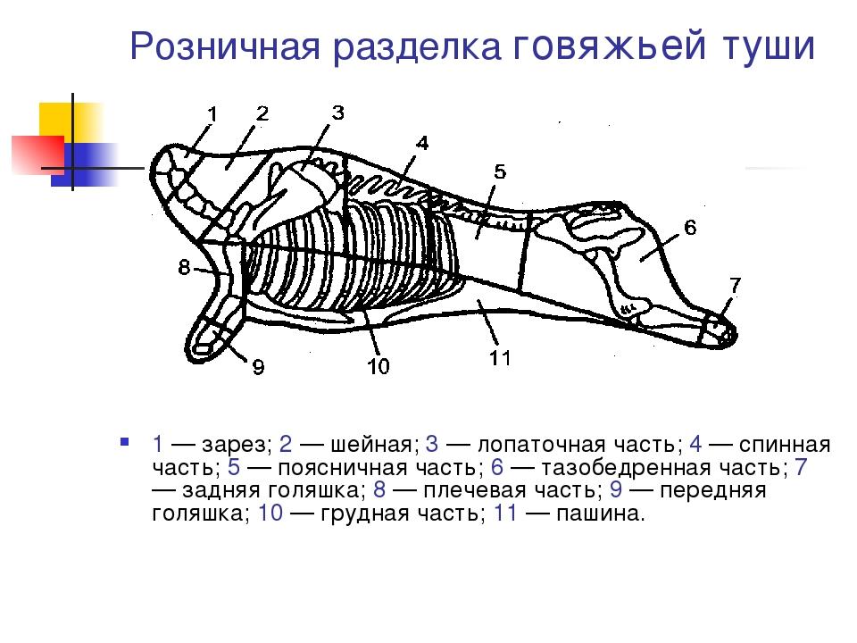 Розничная разделка говяжьей туши 1 — зарез; 2 — шейная; 3 — лопаточная часть;...