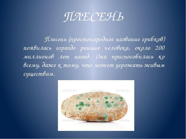 ПЛЕСЕНЬ Плесень (простонародное название грибков) появилась гораздо раньше че...