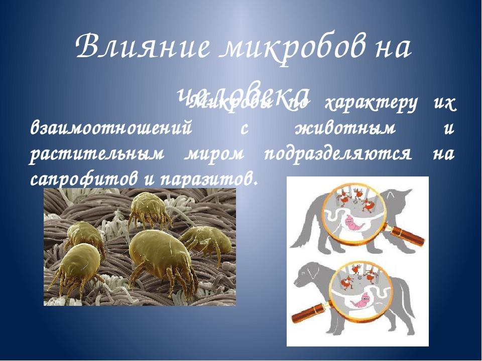 Влияние микробов на человека Микробы по характеру их взаимоотношений с животн...