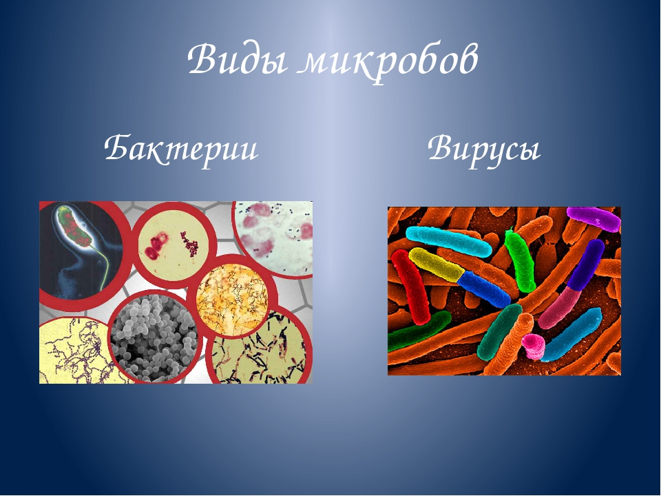 Виды микробов Бактерии Вирусы