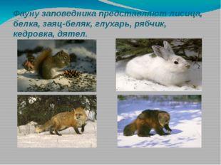 Фауну заповедника представляют лисица, белка, заяц-беляк, глухарь, рябчик, ке